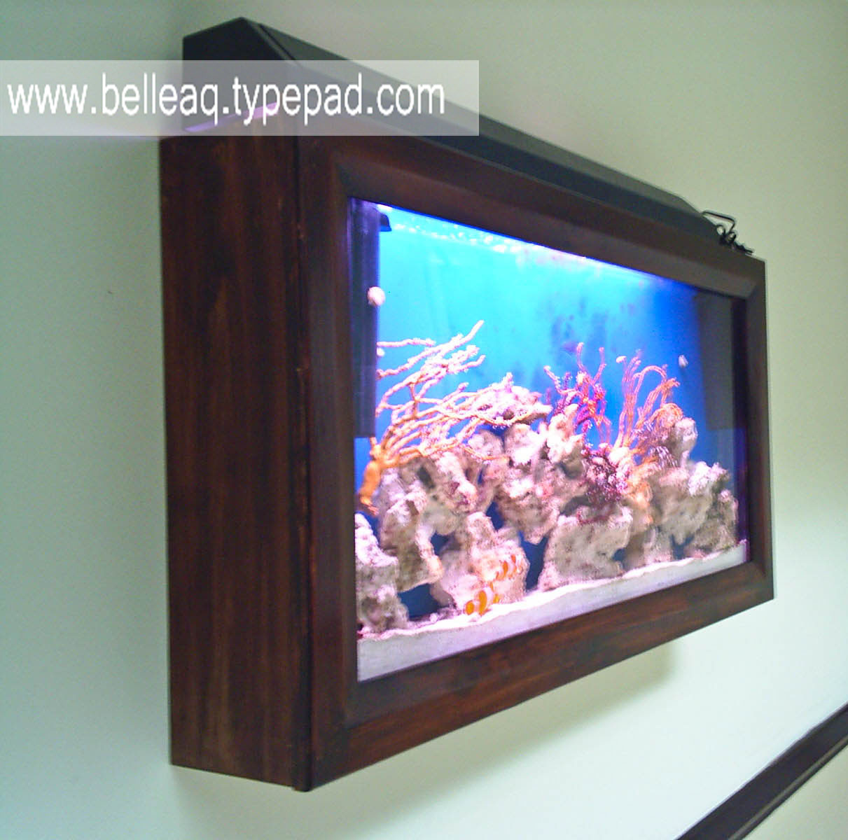 Belle blog belle aquariums miami fish tank on wall jeuxipadfo Images