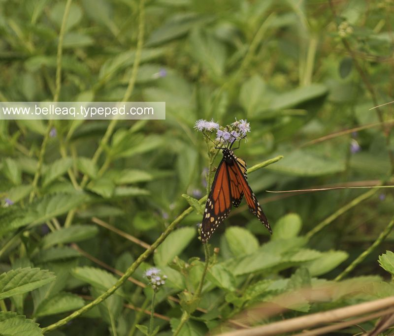 Butterfly Gardening in Florida Belle Aquarium and Garden Design, Miami Garden Design