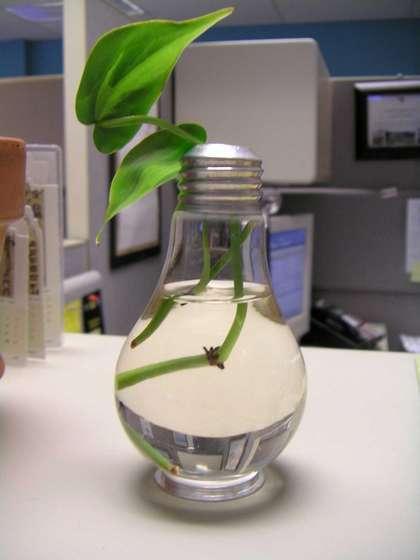 Ligtbulb planter